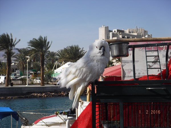028-Попугай