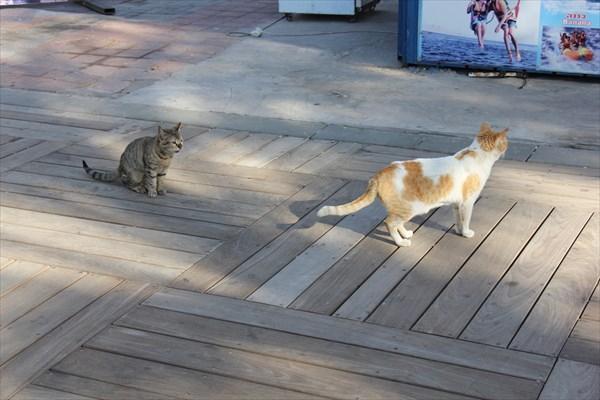 052-Кошки