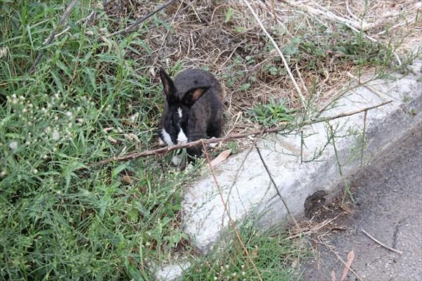 137-Кролик