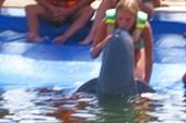 Аня целует  dolfin.