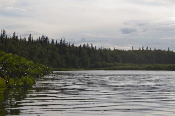 Лесистый пейзаж с калужницей.