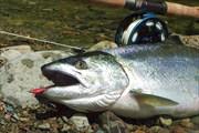 Рыба Сима