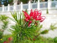 Турция. Ботаника
