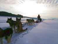 Подготовка к походу на собачьих упряжках. Автор: Егор Хоттабыч