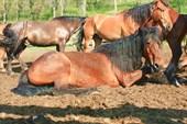 Лошади конной базы
