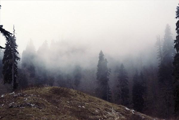 Конец зоны леса