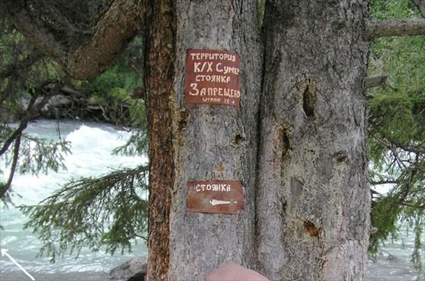 Фото 7. Таблички на дереве у третьего моста через р.Кучерла.