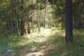 Лесная дорога к плотине на реке Сюткес