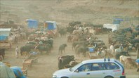 Скотный рынок возле Кабула.