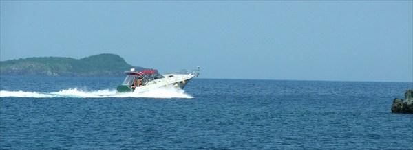 Вот такие звери водятся в Амурском заливе