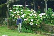 Крупные цветы привлекают