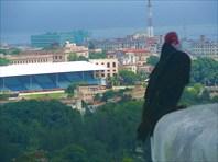 Вид на Гавану с высоты птичьего полета