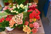 Розы по 9 злотых