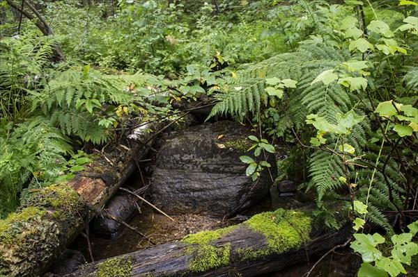Ручей на лесной тропинке.