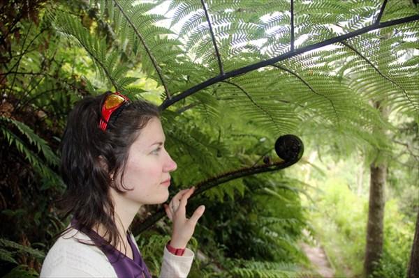 Молодые листья папоротников закручены в завитки