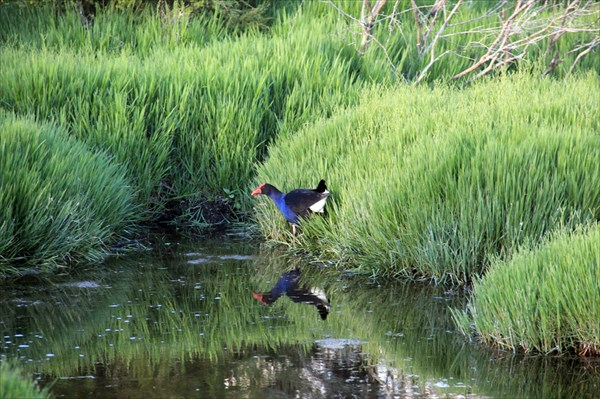 Птицы греются в теплой воде озера