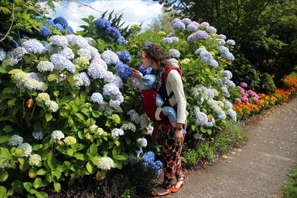 Пахучие цветы-шары
