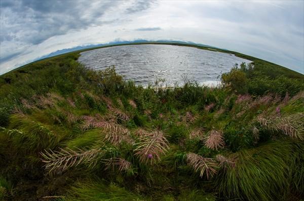 Где- то в болотах за станцией Елецкая