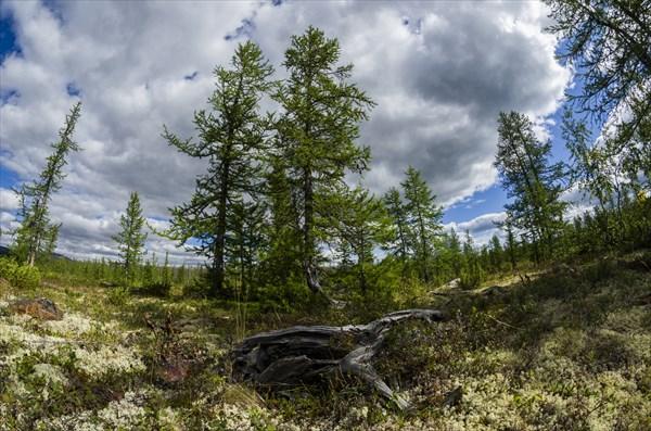 Лес близ Левой Пайеры