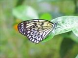 Музей бабочек рядом с городом Пхукет (Phuket Butterfly)