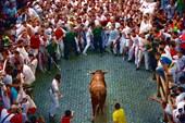 Бега быков