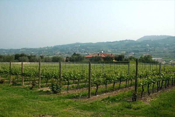 Виноградники Бардолино