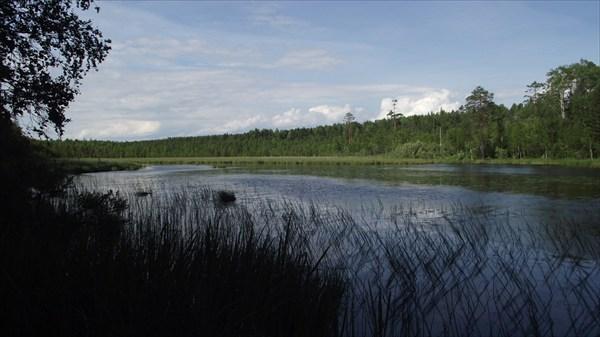 Лесной залив