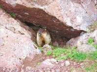 Камчатка. Евражка-забавный коренной житель