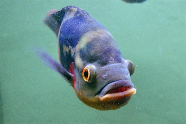 батумский аквариум