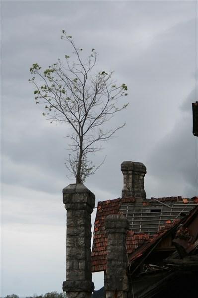 Хитрое деревце забралось выше всех:)