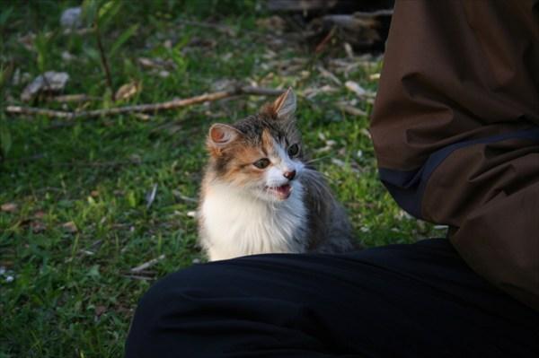Под вечер к нам из кустов вышла маленькая голодная кошка...