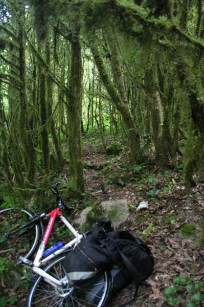 Зарисовка из фильма ужасов - мангровые заросли, одинокий велик..