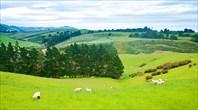 Типичный Новозеландский пейзаж