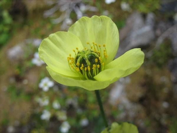 IMG_8721 Цветик.