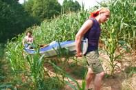 через кукурузное поле