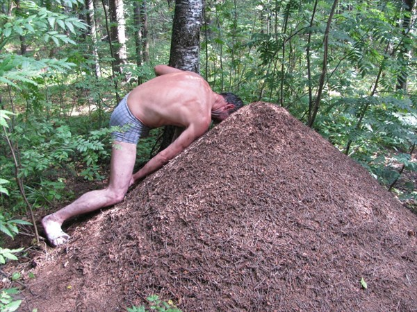 Руку лечат муравьи..