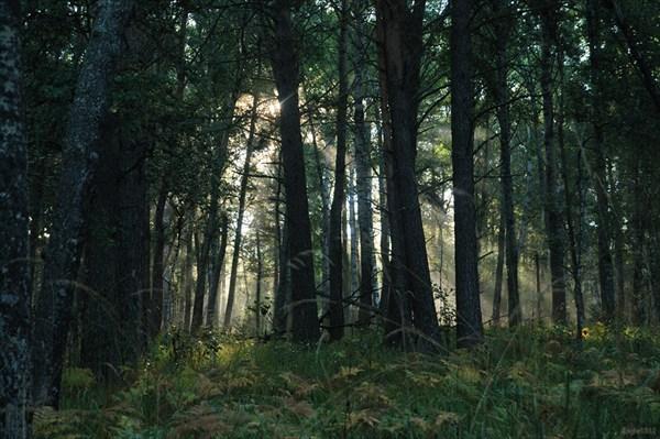 Утро в уральском лесу
