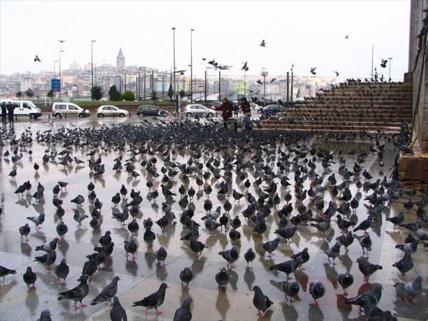 птичий грип в Стамбуле