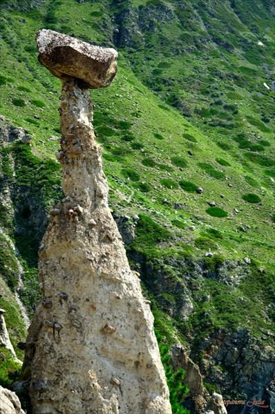 Одиночный гриб