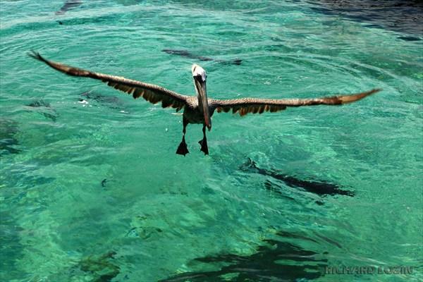 Национальный парк Архипелаг дель Розарио. Карибы