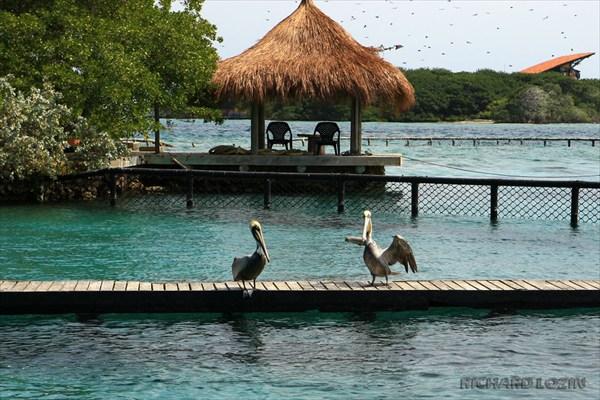 Isla San Martin Oceanario /Aquarium/ Oceanarium