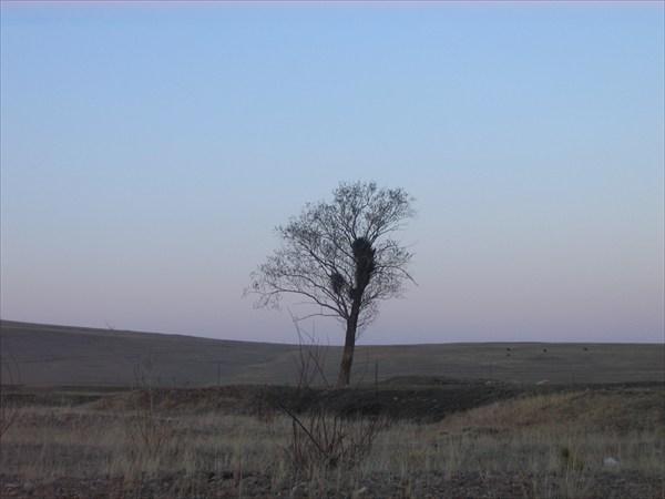 Древа жизни