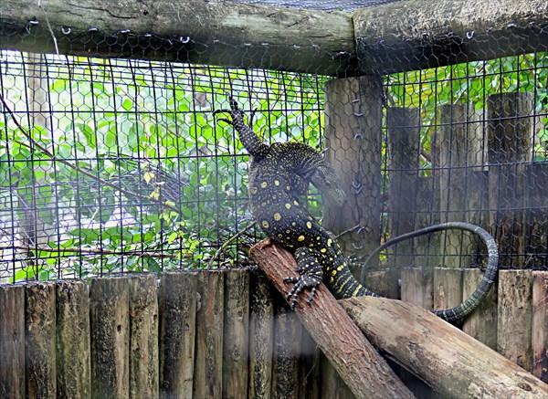 019-Мини-зоопарк