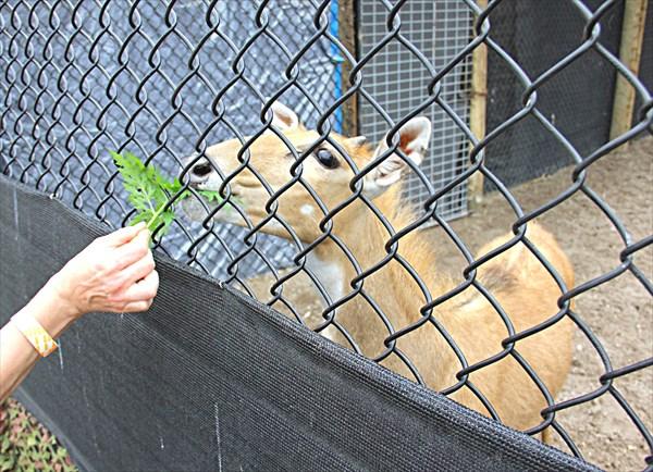 021-Мини-зоопарк