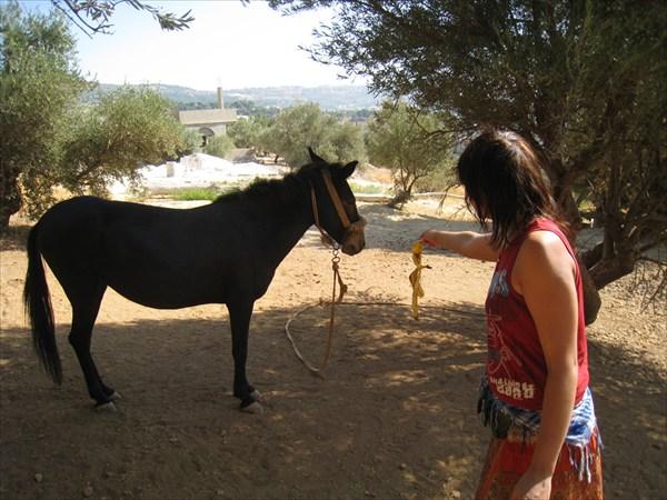 Кормим лошадь в Иордании