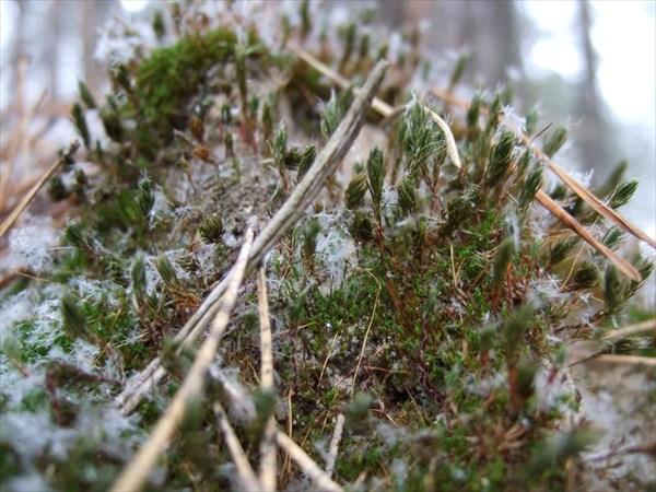 мох и сосновые иглы