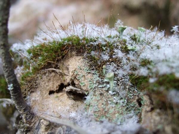 43 заснеженный мох