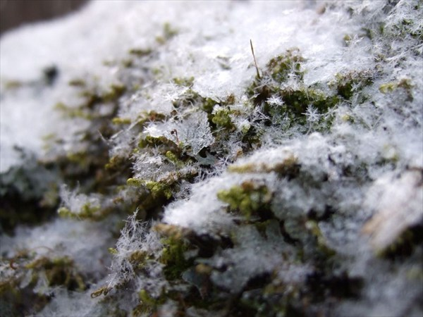 44 обледеневший мох