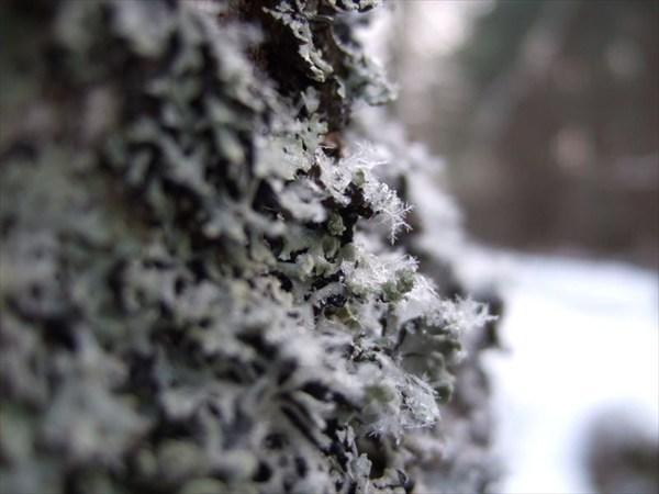 46 снежинка в фокусе