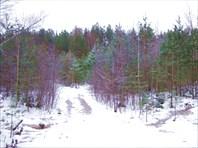 28 дорога в лес